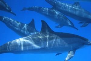 Nager avec les dauphins à Sataya : quel bonheur !